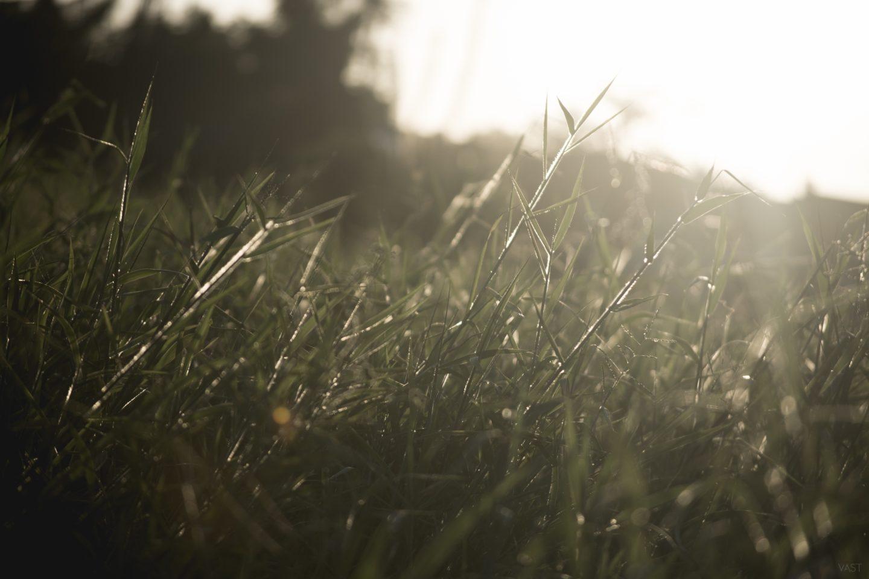 cropped-grass-1284668.jpg
