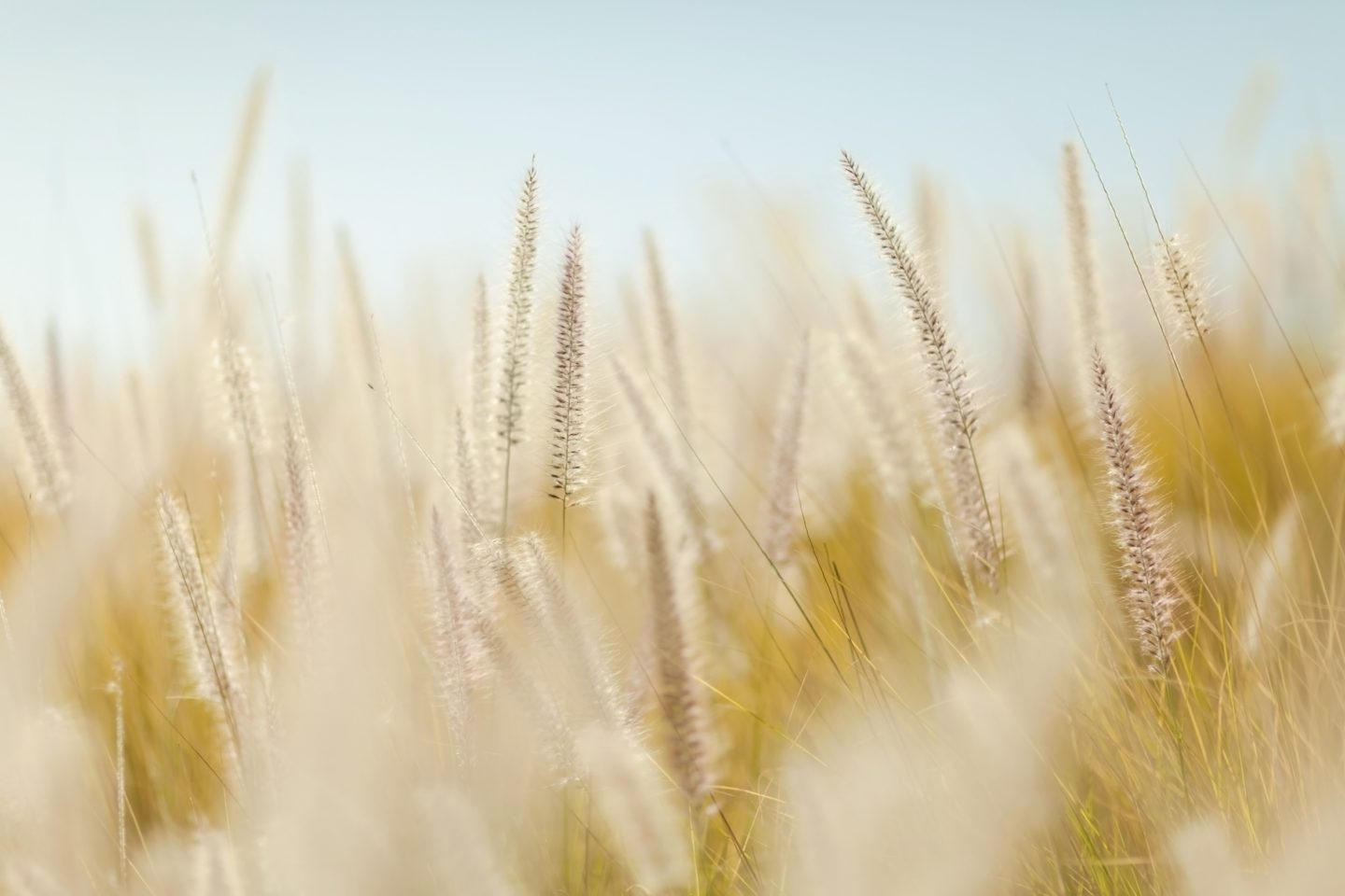 cropped-wheat-690912.jpg